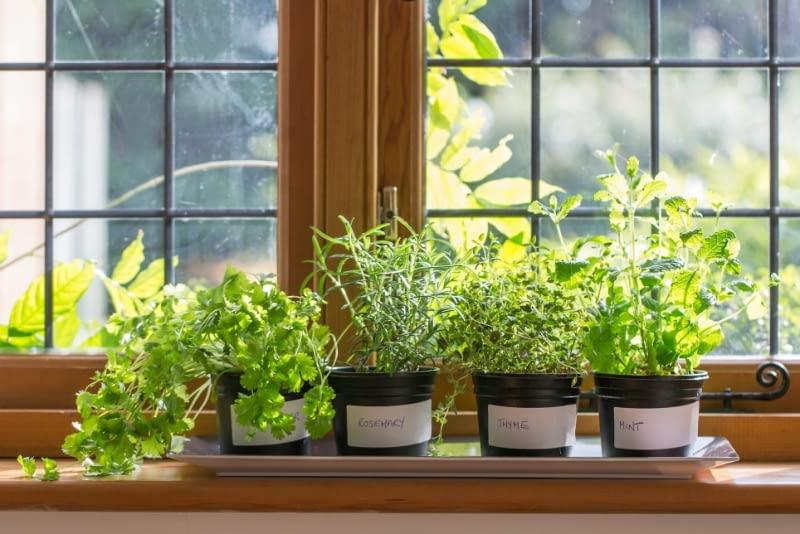 Warzywa I Zioła Z Parapetu E Ogrody