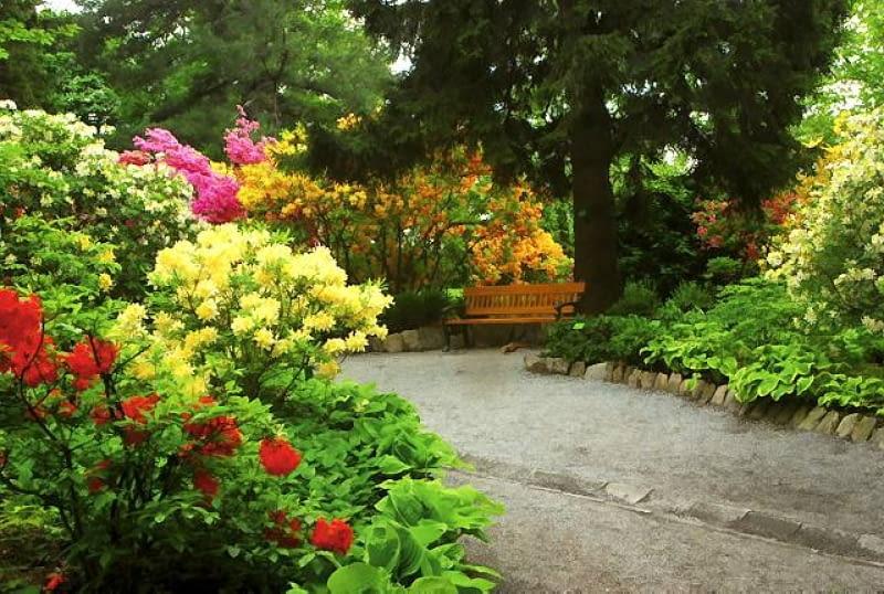 różaneczniki, arboretum Wojsławice
