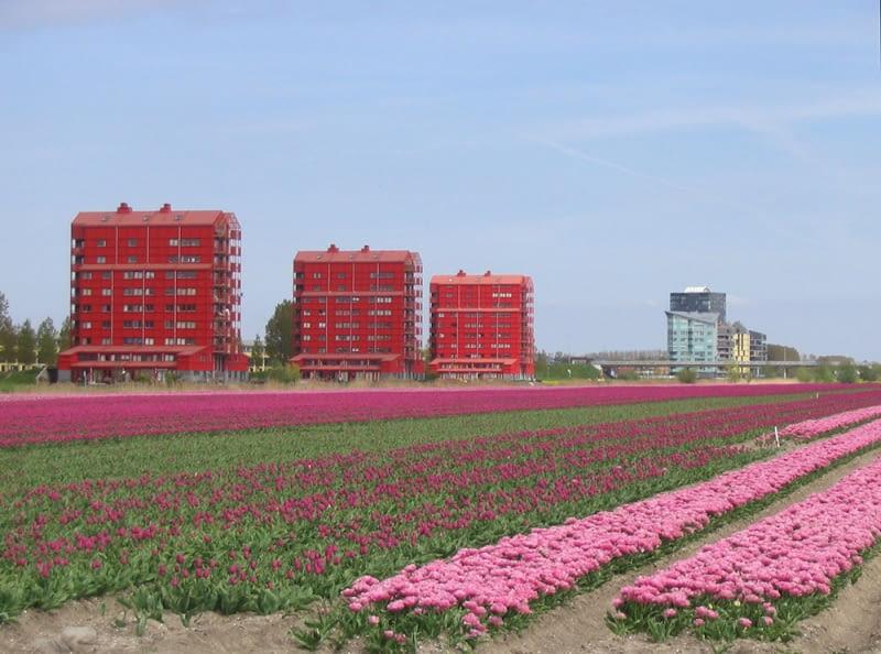 Almere Holenderski Eksperyment Urbanistyczno Społeczny Bryła