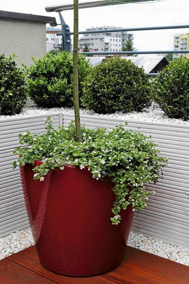 Wybór Donic Dla Roślin Tarasowych E Ogrody