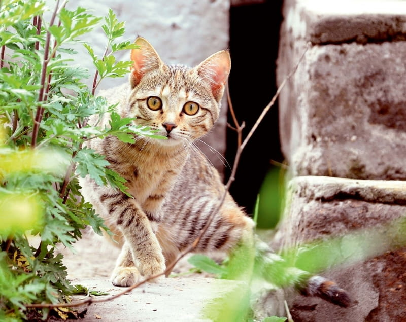 Koty są drapieżnikami, więc natura każe im zakopywać odchody. Lubią załatwiać swoje potrzeby w spokojnych miejscach, nie niepokojone przez nikogo