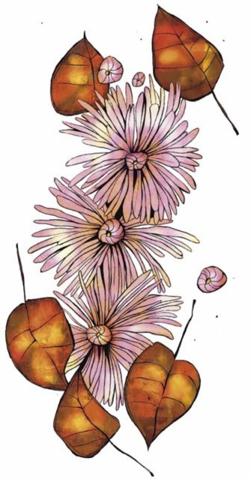 Chryzantemy ogrodowe są w pełni odporne na mróz, ale odmiany doniczkowe tworzące kuliste kępy wymagają okrycia, gdy zapowiadane są nocne przymrozki