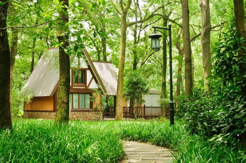 Projektujemy ogród w stylu leśnym. Adaptujemy zadrzewioną działkę