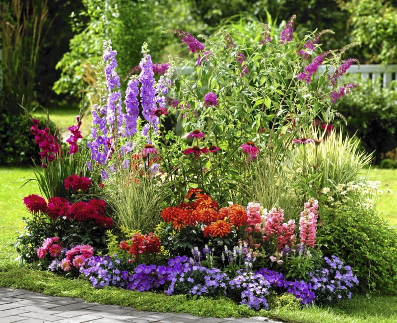 Buddleja ( Sommerflieder ), Delphinium ( Rittersporn ), Dahlia ( Dahlien ), Antirrhinum ( L^wenm ulchen ), Campanula ( Glockenblumen ), Gladiolus ( Gladiolen ), Echinacea purpurea ( Roter Sonnenhut ), Salvia farinacea ( Mehlsalbei ), Leucanthemum ( Margeriten ), Gr ser SLOWA KLUCZOWE: GAP Terrassenbeet Beet draussen Garten Sommer pink lila rot orange Farbe Duft Hochsommer 000 quer Margeriten Inselbeete