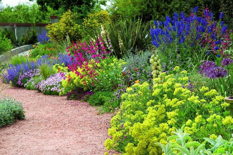 Rośliny Na Słońce I Suszę E Ogrody