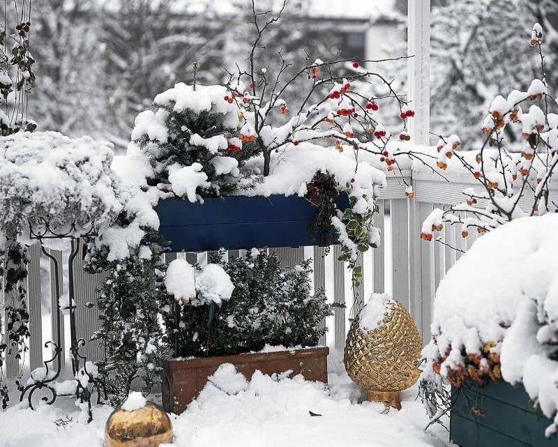 Piękny Balkon Zimą Roślinne Kompozycje Na Balkon