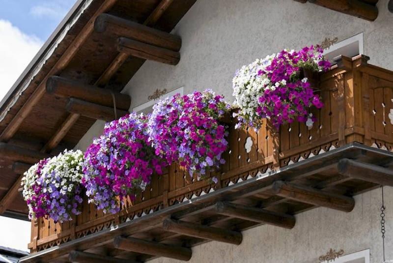 Najlepsze Kwiaty Na Balkon Jakie Rośliny Sprawdzą Się Na