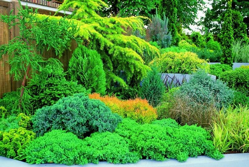 Iglaki są bardziej przewidywalne niż zmienne rośliny liściaste - i to ich niewątpliwa zaleta.