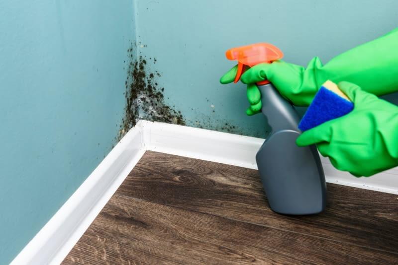 Grzyb na ścianach.   Jak go skutecznie usunąć?