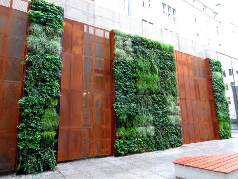 Wrocławska zielona ściana przy Urzędzie Miejskim