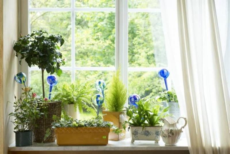 Urlopowe Podlewanie Kwiatów E Ogrody