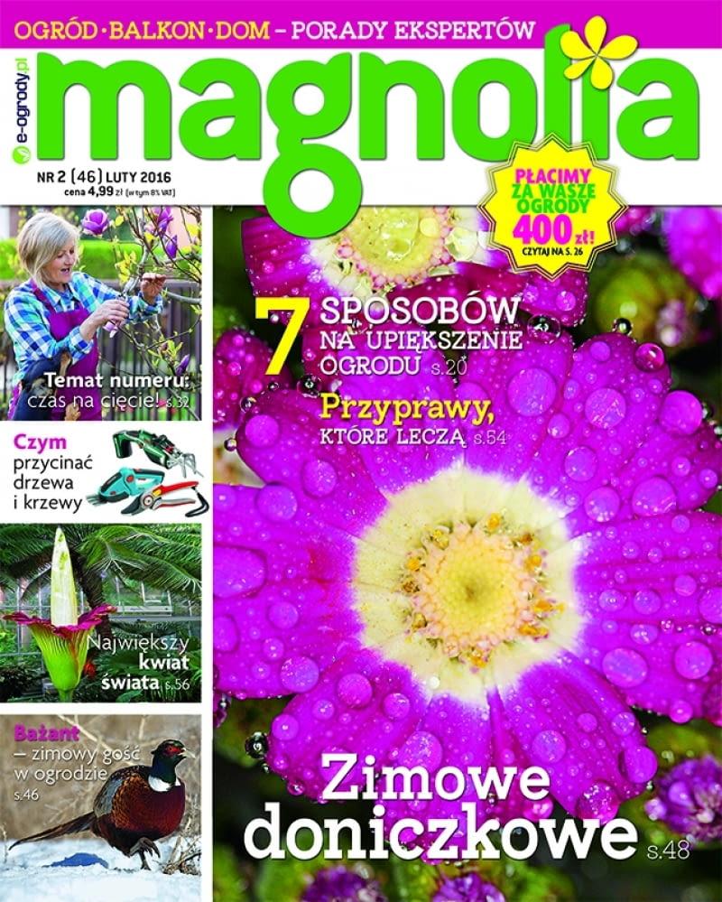 Magazyn Magnolia 2/16