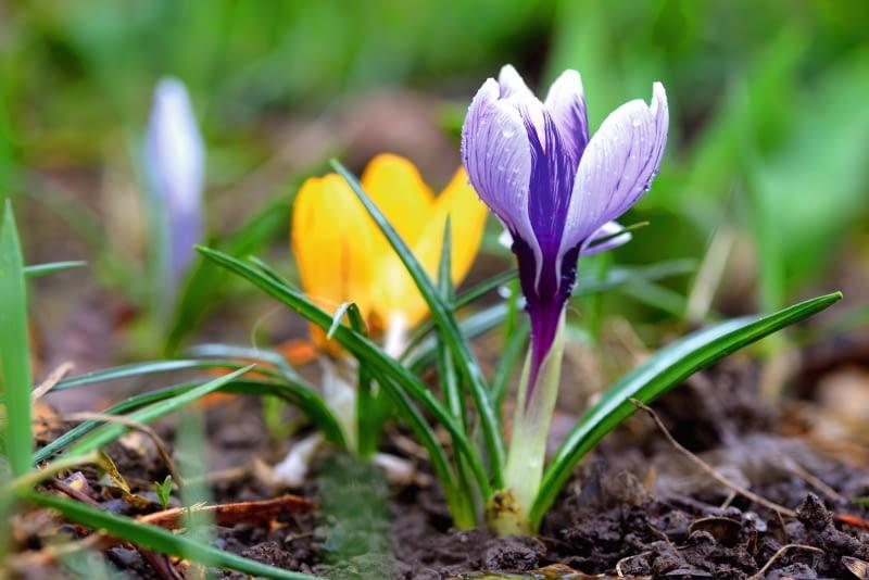 W oczekiwaniu na wiosnę.