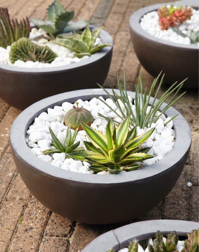 Kaktusy I Sukulenty Pustynne Kompozycje W Doniczce E Ogrody