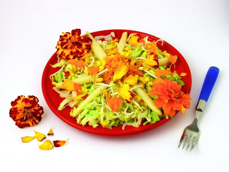 5A3GCR4 Marigolds salad Tagetes hybr. Recipe available