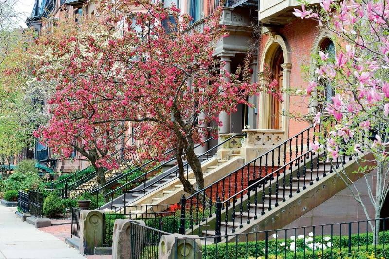 Boston, jedno z większych miast Stanów Zjednoczonych, wręcz tonie w zieleni. A za najbardziej eleganckie uchodzą dzielnice z ulicami obsadzonymi mnóstwem kwitnących drzew.