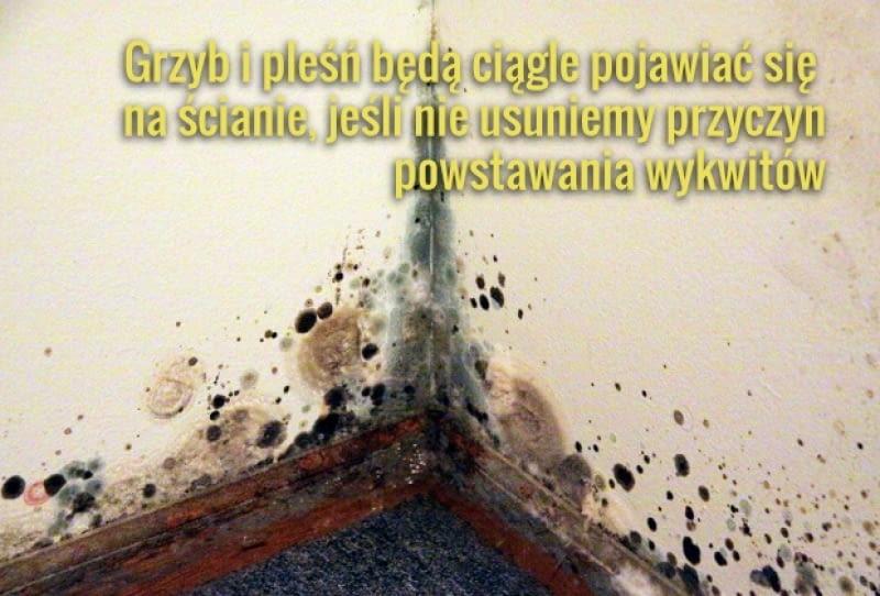 Wykwity trzeba usunąć ze ściany razem z tynkiem.
