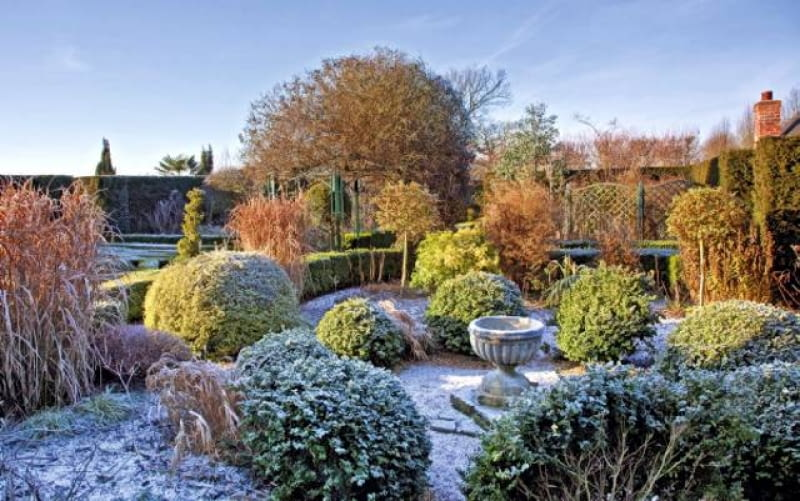 Shaped buxus hedging with mature shrubs and trees in frost and winter sunshine at at Wilkins Pleck, NGS, Whitmore, Staffordshire