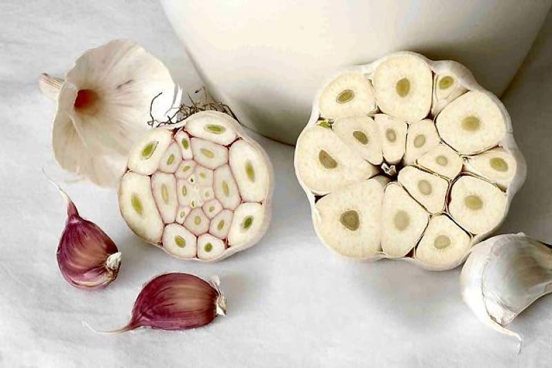 Po lewej typ niekwitnący, po prawej - kwitnący, z łodygą kwiatową w centrum główki