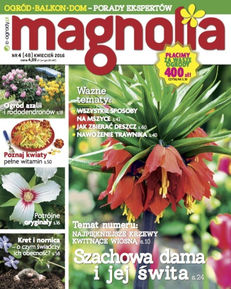 Magnolia 04/2016