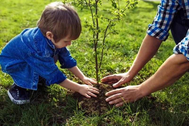 Rośliny potrzebne od zaraz. Szybko rosnące drzewa.