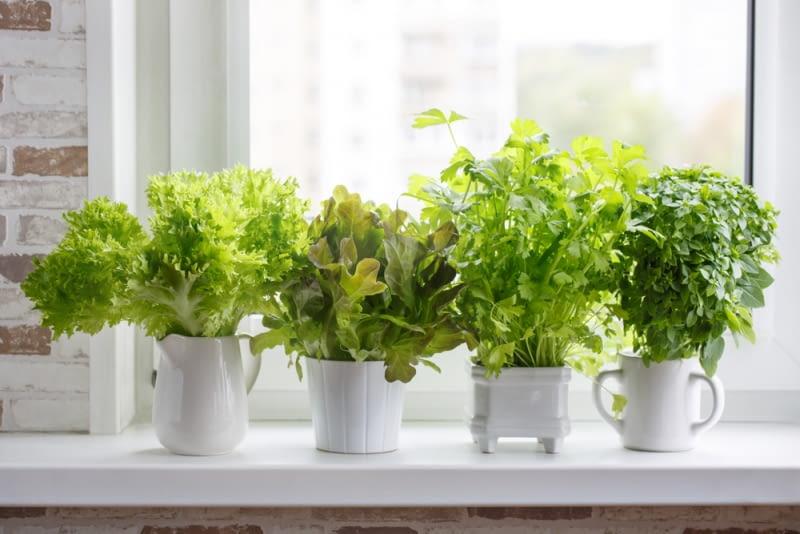 Zimowy ogródek na parapecie - jak uprawiać rośliny i zioła w domu
