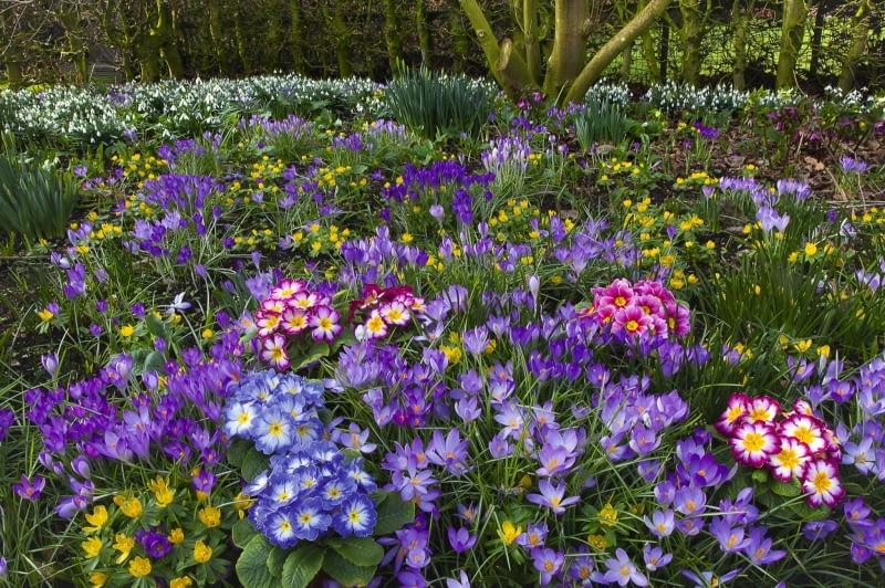Jakie Kwiaty Kwitna Wczesna Wiosna W Ogrodzie Poradnik Ogrodniczy E Ogrodek