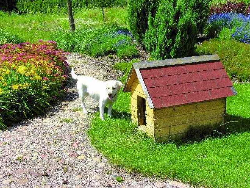 buda dla psa,pies,psy,ogród