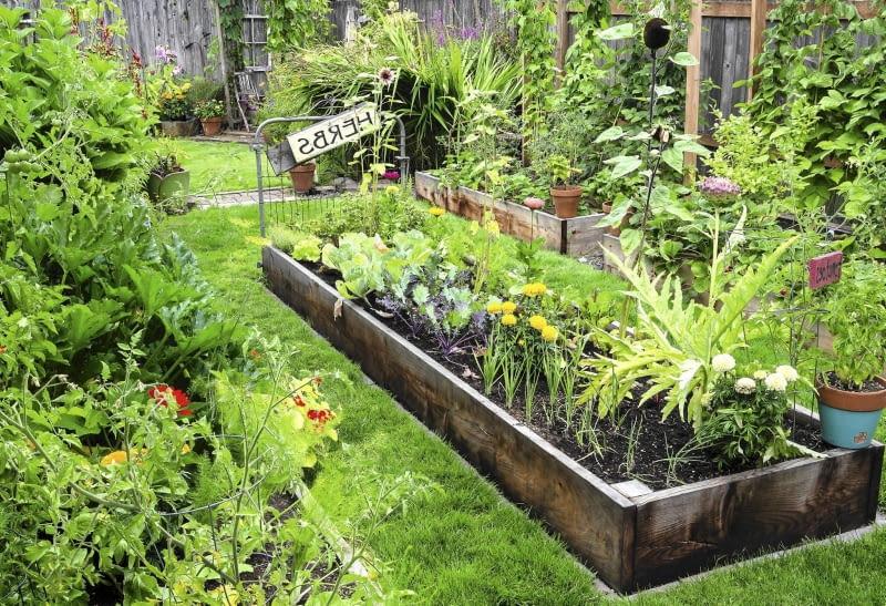 Kwiatowo-warzywną grządkę z cebulą, kardami, kalarepką, słonecznikami okraszono aksamitkami i cyniami.