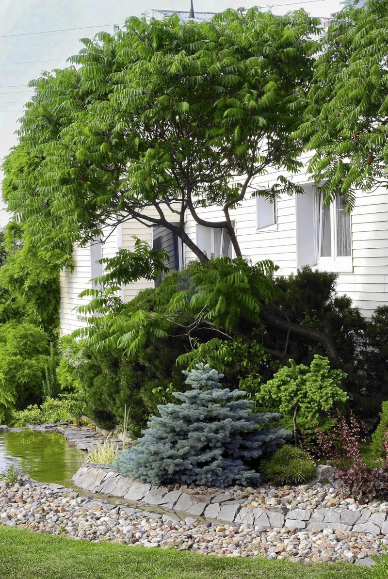 Drzewa Do Małych Ogrodów E Ogrody