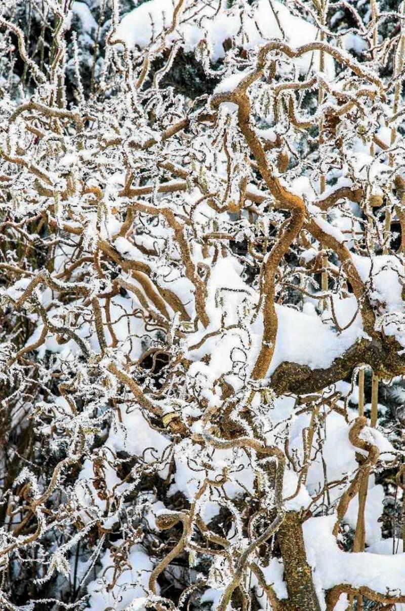 SLOWA KLUCZOWE: reklinek slawinska leszczyna