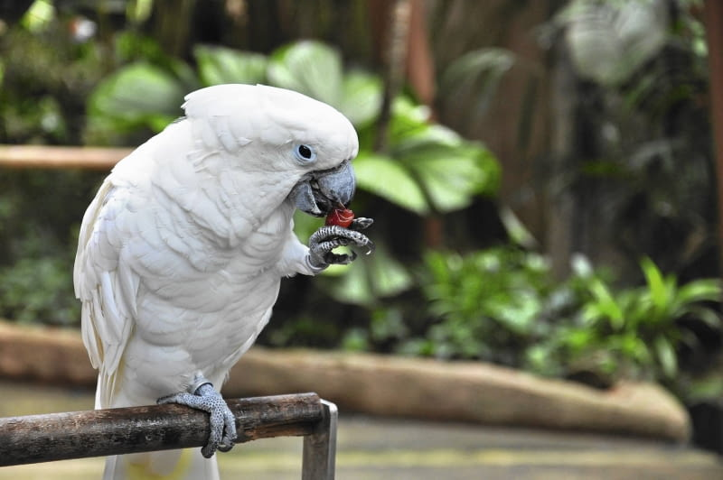 Papugi Gadające Ptaki E Ogrody