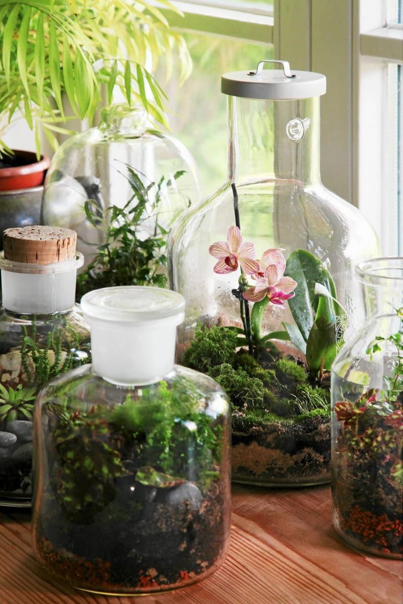 Mały Ogród W Szkle