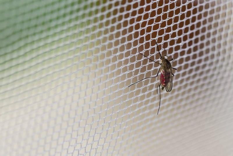 siatka na komary, moskitiera