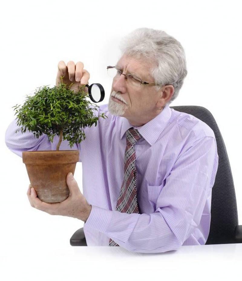 Szkodniki roślin doniczkowych