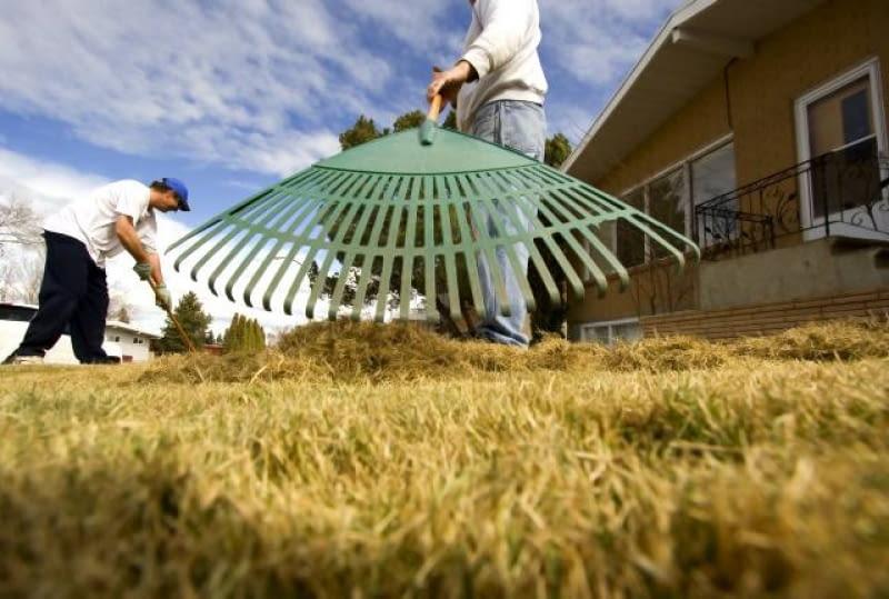 Pielęgnacja trawnika po zimie.
