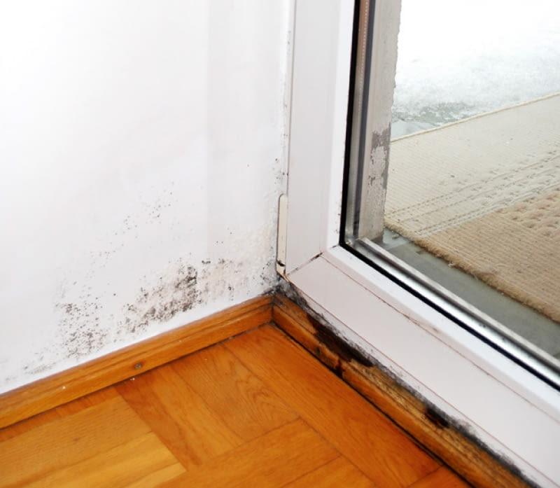 pleśń na ścianie, grzyb na ścianie, zapleśniałe ściany
