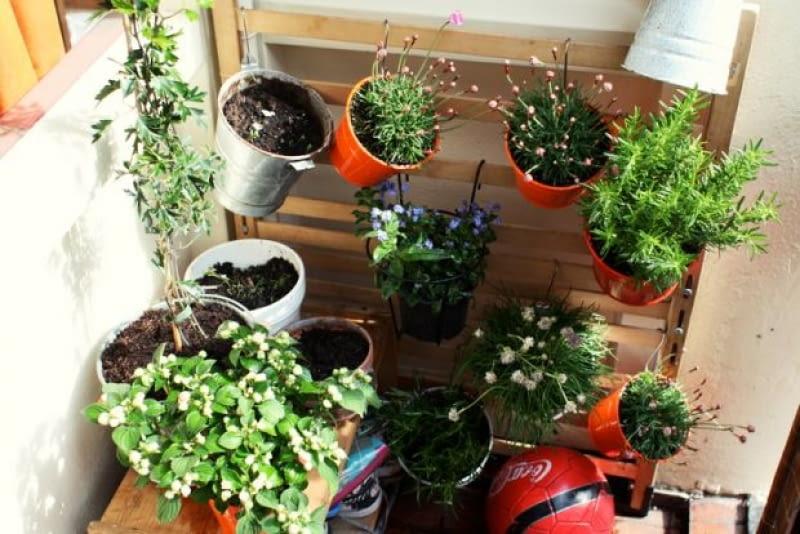 Warzywa I Zioła Z Własnej Doniczki Na Balkonie E Ogrody