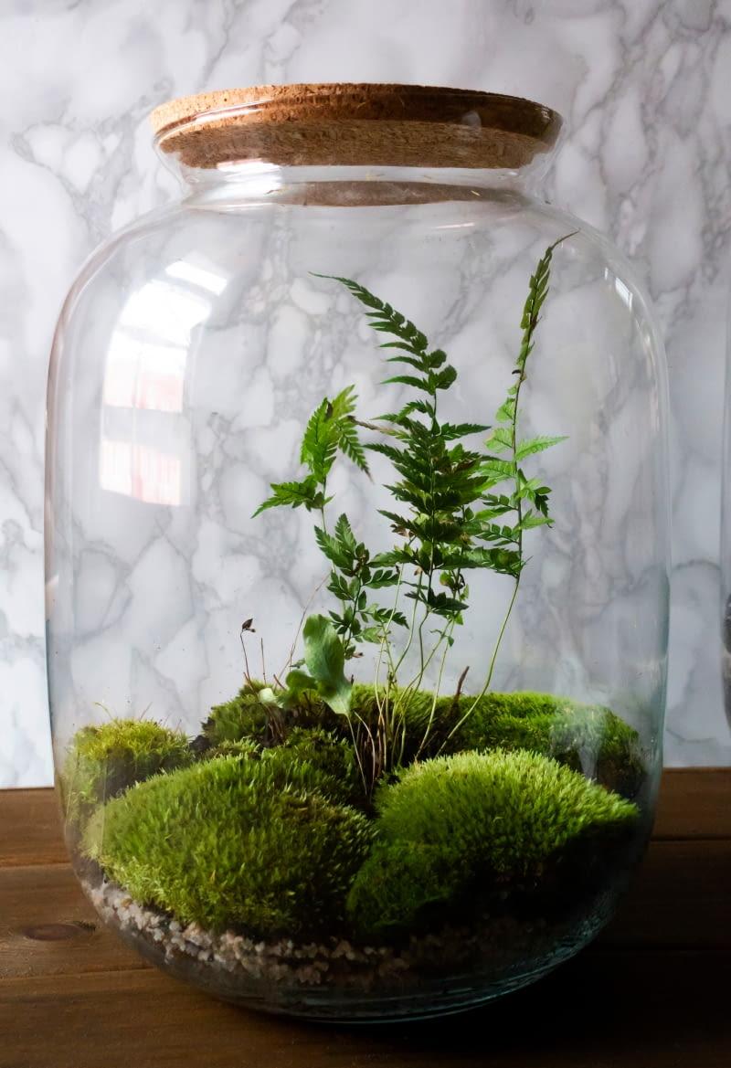 Las w słoiku - jak zrobić? Jakie rośliny do lasu w szkle? - e-ogrody -  Zrób_to_sam