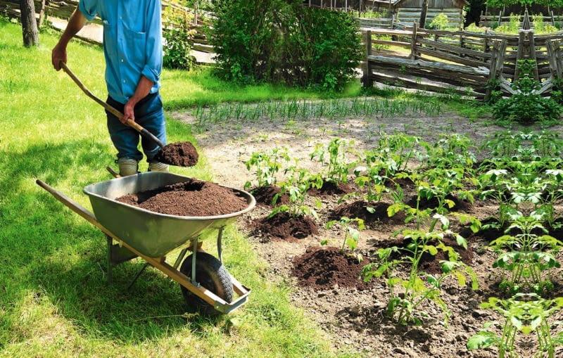 Gdy minie niebezpieczeństwo wystąpienia przymrozków, sadzimy rozsadę pomidorów i papryki.