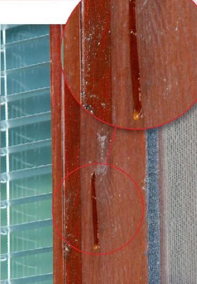 Żywica na drewnianym oknie