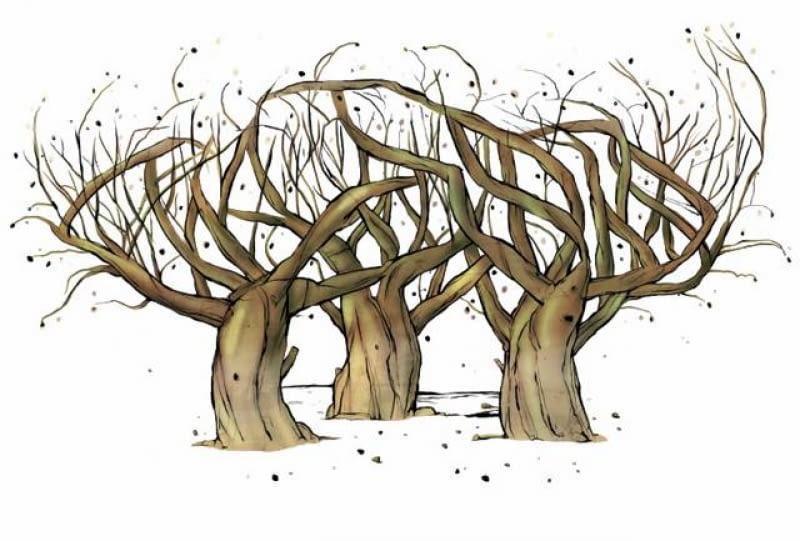 Dookoła krzewów wrażliwych na mróz usypujemy kopczyki ziemi, aby ochronić dolne części pędów i korzenie