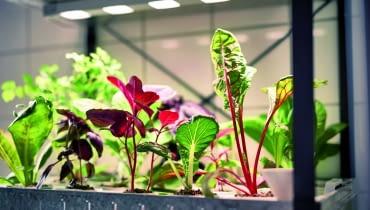Młode warzywa prosto z granulatu. KRYDDA, zestaw do upraw (regał z ledowym oświetleniem, nasiona, podłoże i nawóz), od 99 zł, IKEA