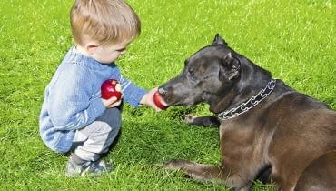 Substancje zawarte w nasionach jabłek mogą zaszkodzić psu.