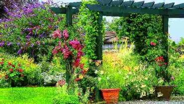 Kwitnąca budleja jest prawdziwą ozdobą przydomowego ogrodu