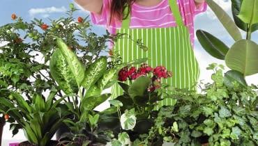 Duża ilość światła wiosną oraz nasza staranna opieka wkrótce poprawią kondycję roślin.