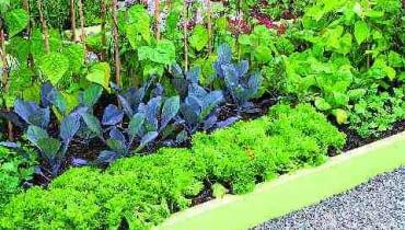 Gdy grządki otoczymy deskami, ziemia nie będzie się wysypywać podczas zbierania warzyw oraz prac pielęgnacyjnych