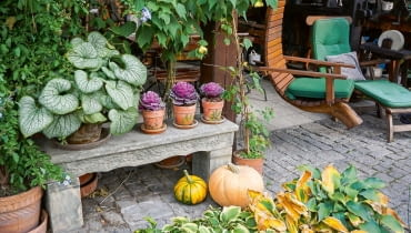 Taras zdobią rośliny wdonicach (brunnery, ołowniki, zaślaz). Widzimy tu również zabytkową ławeczkę zpiaskowca.