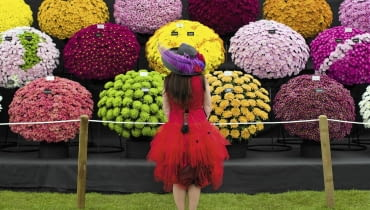 United Kingdom, London : A visitor stops to look at a flower display at the Royal Horticultural Society's Chelsea Flower Show in London on 19 May, 2014. ******* RHS / Justin Tallis / 19.5.14 SLOWA KLUCZOWE: RHS Chelsea Flower show