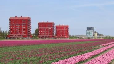 Almere, źródło: wikipedia.org